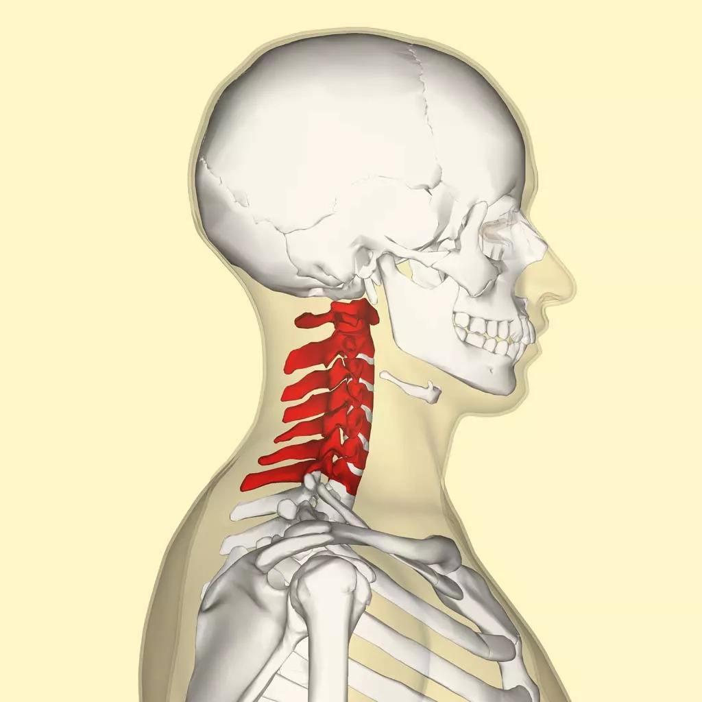电脑族必须学的颈椎保养课